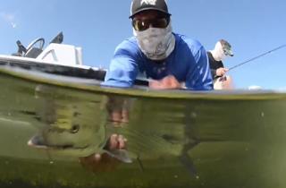 BiscayneBonefish