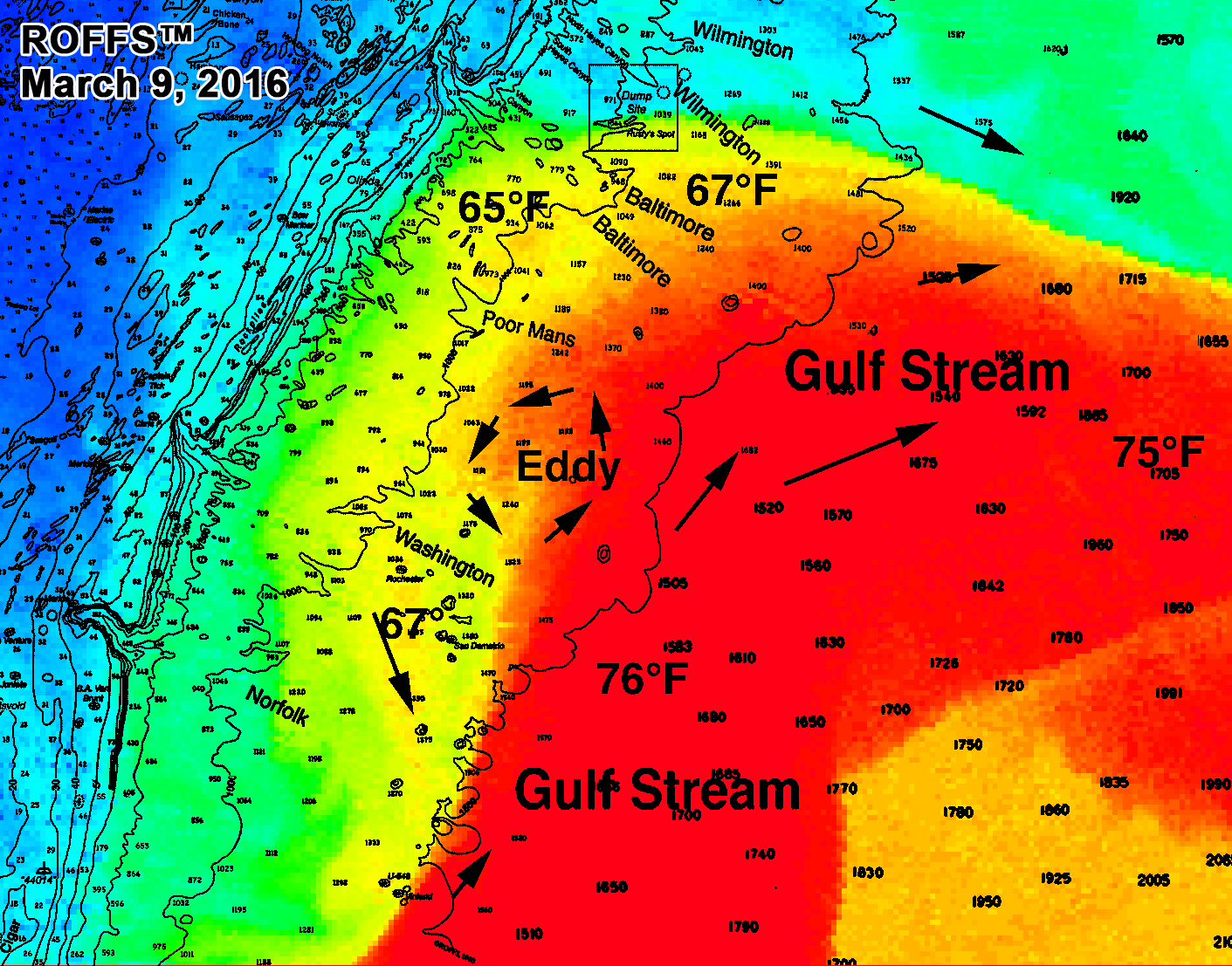 Gulf stream water hits the baltimore canyon to washington for Gulf stream fishing